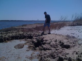 Charlie walking back through some beach flora and fauna